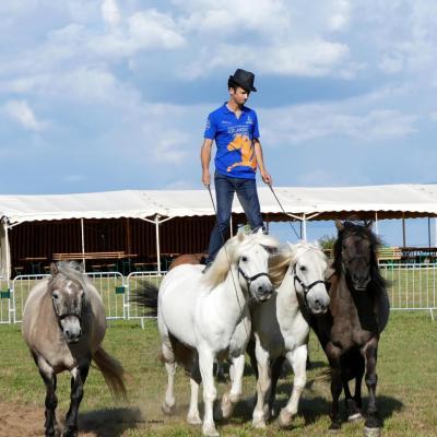 03-09-2017 - Fête du cheval
